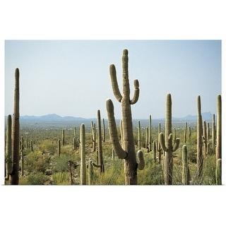 """""""Cactus in Saguaro National Park, Arizona"""" Poster Print"""
