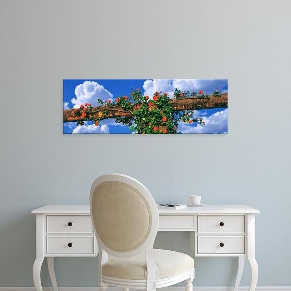 Easy Art Prints Panoramic Images's 'Arbor and spreading rose, Temecula, California, USA' Premium Canvas Art