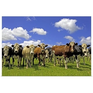 """""""Group of cows, New Zealand, North Island, Auckland"""" Poster Print"""