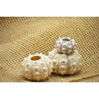 9GreenBox - 3 Purple Sputnik Sea Urchin -Great For Ornament Decorating