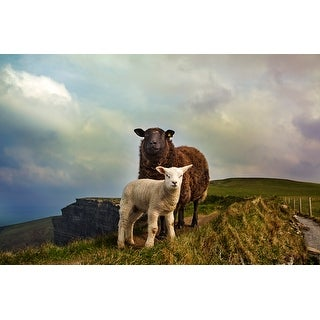 White And Brown Sheeps Canvas Wall Art Photograph