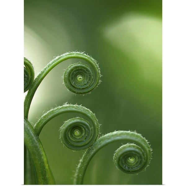 """""""Fern in forest."""" Poster Print"""