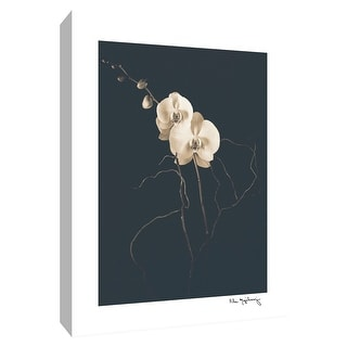 "PTM Images 9-154627  PTM Canvas Collection 10"" x 8"" - ""White Phalaenopsis"" Giclee Flowers Art Print on Canvas"