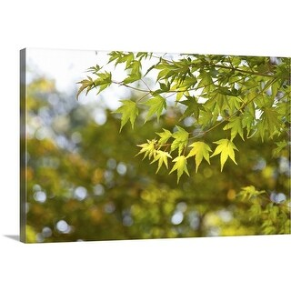 """Maple leaves on a tree in Korea in the National Park"" Canvas Wall Art"