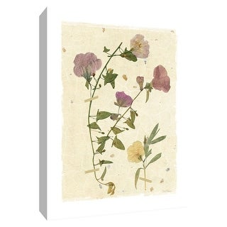 """PTM Images 9-148629  PTM Canvas Collection 10"""" x 8"""" - """"Pressed Morning Glory"""" Giclee Flowers Art Print on Canvas"""