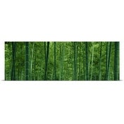Poster Print entitled Bamboo Forest