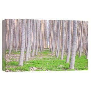 "PTM Images 9-102124  PTM Canvas Collection 8"" x 10"" - ""Trapped in Green"" Giclee Forests Art Print on Canvas"