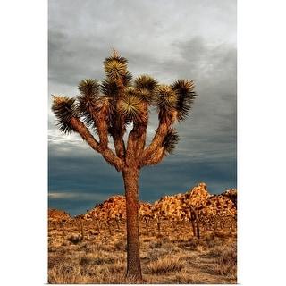 """Joshua Tree National Park, California, USA"" Poster Print"