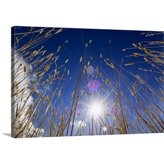 """""""Low angle view of sunstar through grasses, blue sky."""" Canvas Wall Art"""