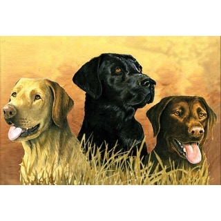 """Paint By Number Kit Artist's Collection 12""""X16""""-Labs In Marsh"""