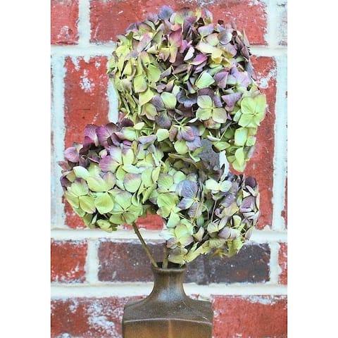 Dried Hydrangea Flower Bunch - Burgundy 4-6in. heads, 3-5 stems per bunch, Hydrangea Stem Length 12-18in. -- Case of 10 bunches