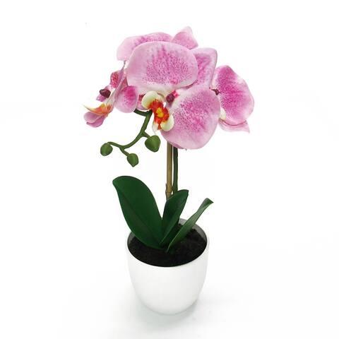 Phalaenopsis Orchid Flower Arrangement in White Pot 13in