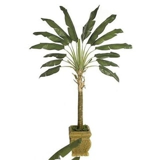 Autograph Foliages P-70330 - 6 Foot Traveller Palm Tree - Green