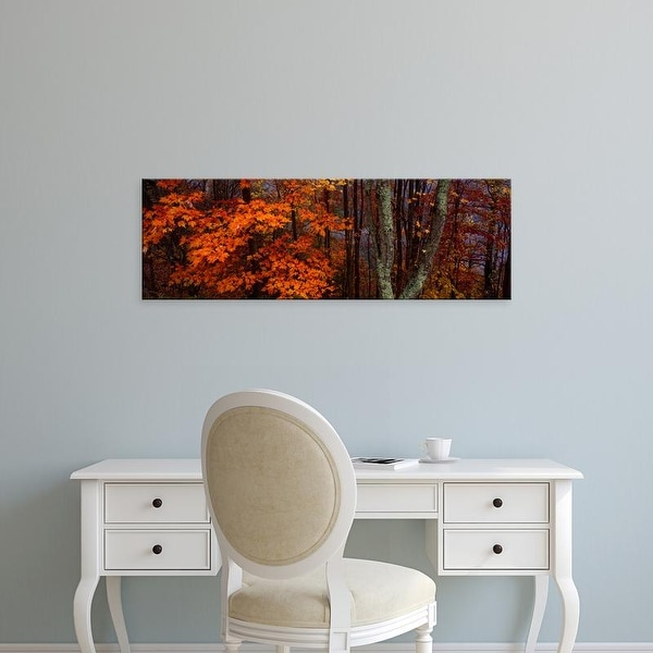 Easy Art Prints Panoramic Image 'trees in forest, Great Smoky Mountains National Park, North Carolina' Canvas Art