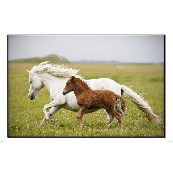 """""""Running mare and her foal in Iceland"""" Poster Print"""