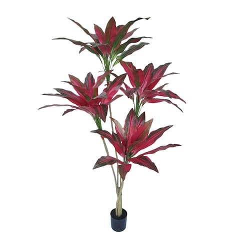 5ft Tropical Cordyline Ti Leaf Tree in Pot