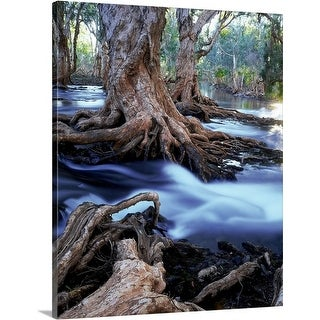 Premium Thick-Wrap Canvas entitled Gnarled roots of melalueca trees in flooded stream, great sandy desert, Washington