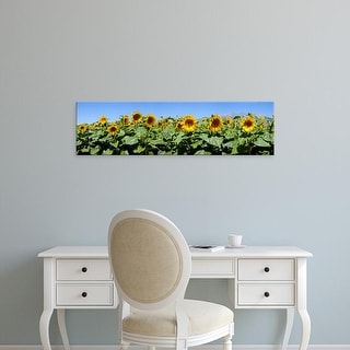 Easy Art Prints Panoramic Image 'Sunflowers in a field, Blanca, Costilla County, Colorado' Canvas Art