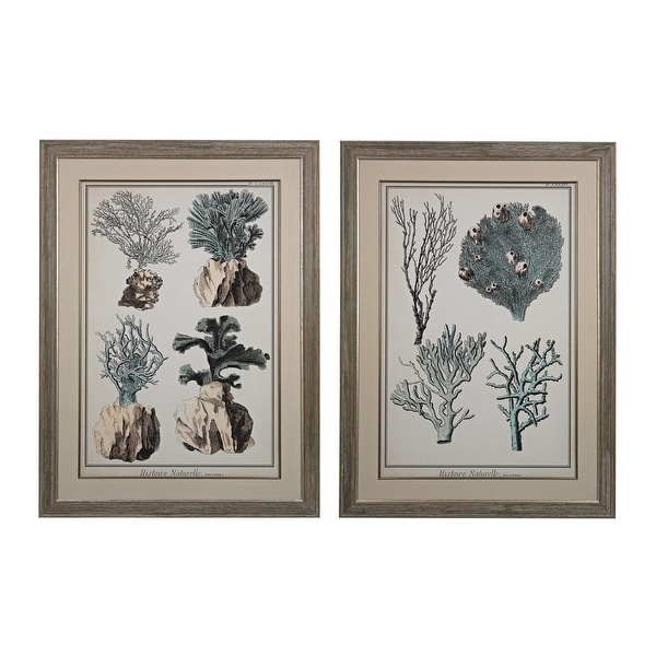 """Elk Home 151-008/S2 45"""" x 33"""" Art Prints - Coral Species I and II - Set of Two - Washed Wood"""