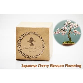 9greenbox Bonsai Seed Kit Japanese Cherry Blossom Bonsai Overstock 17936225