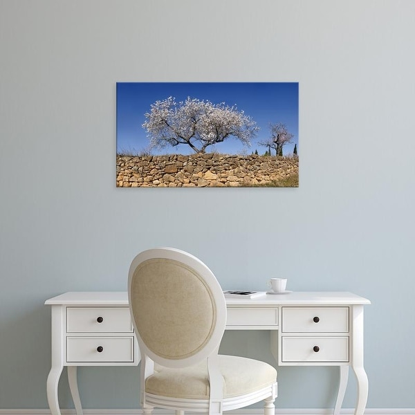 Easy Art Prints Panoramic Images's 'Almond blossom near the town of Vinaros, Province of Castellon, Spain' Canvas Art