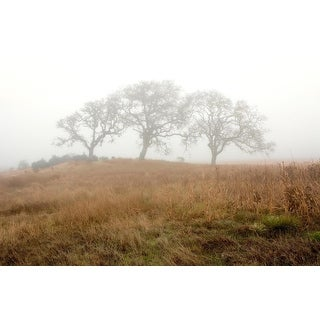 Easy Art Prints Alan Blaustein's 'Oak Tree #16' Premium Canvas Art