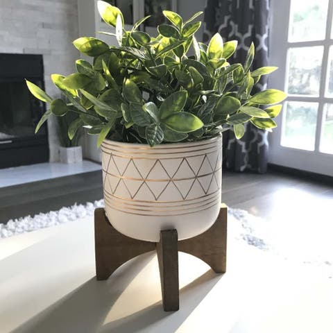 """12""""H tea plant in 5"""" GEO Ceramic footed pot - ONE-SIZE"""