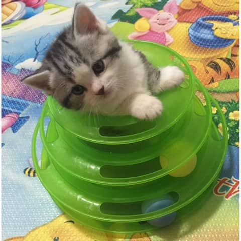 Funny Pet Kitty Cat puppy dog Toy Trilaminar Petstages Tower of Tracks Ball Disk - Green