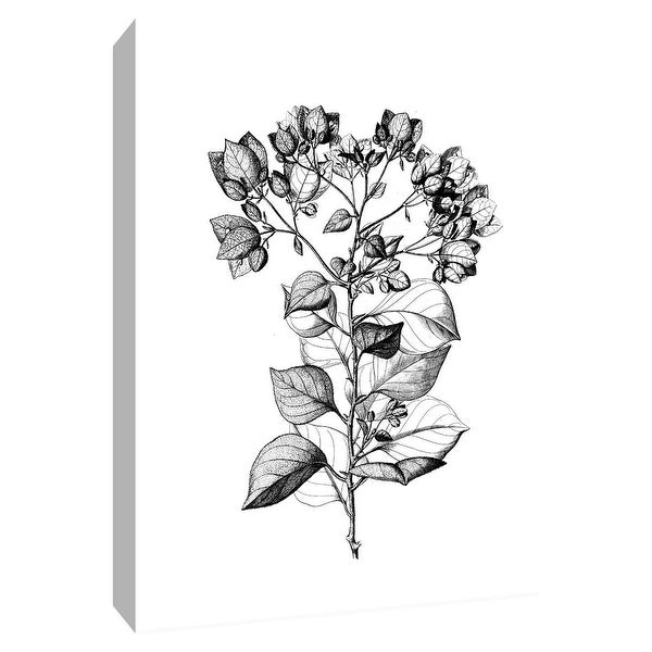 """PTM Images 9-148716 PTM Canvas Collection 10"""" x 8"""" - """"Botanical Black and White I"""" Giclee Flowers Art Print on Canvas"""