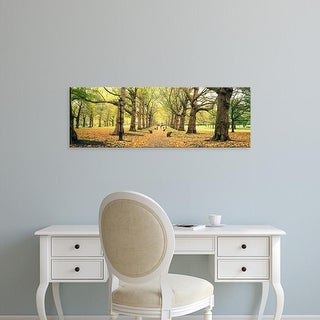 Easy Art Prints Panoramic Images's 'Trees along a footpath in a park, Green Park, London, England' Premium Canvas Art