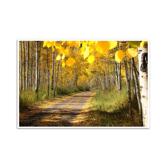 Fall Foliage - Aspen, Colorado - Capturing America - 24x16 Matte ...