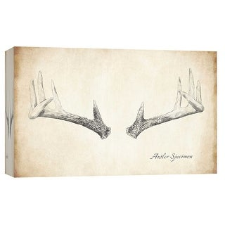 "PTM Images 9-103730  PTM Canvas Collection 8"" x 10"" - ""Antler Specimen B"" Giclee Antlers Art Print on Canvas"
