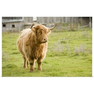 """""""Highland Cattle in Pasture, Burnt River, Ontario, Canada"""" Poster Print"""