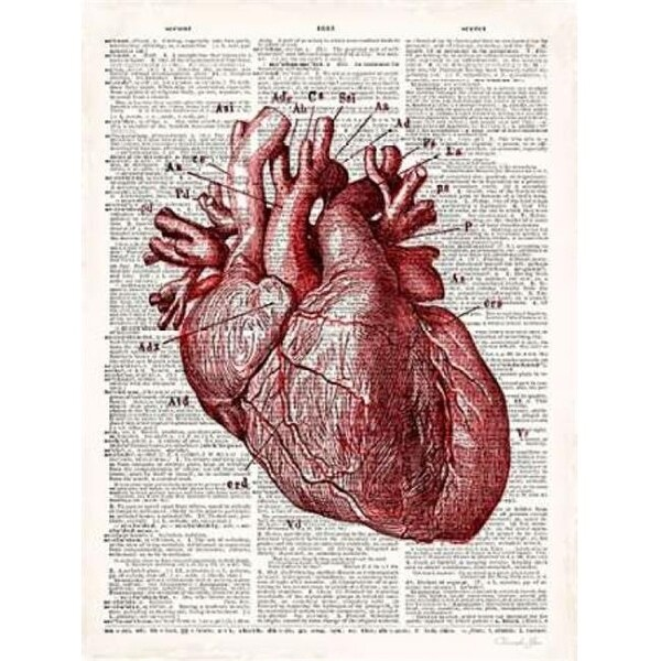 Shop Vintage Anatomy Heart Poster Print by Christopher James, 9 x 1 ...
