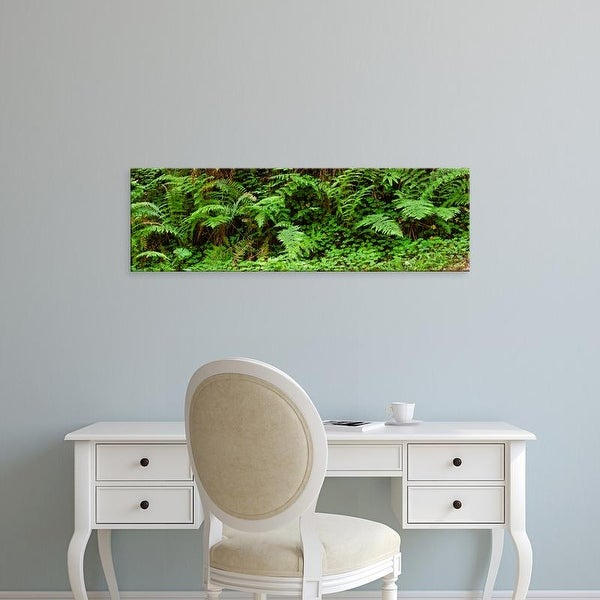 Easy Art Prints Panoramic Image 'Ferns in front of Redwood trees, Redwood National Park, California, USA' Canvas Art