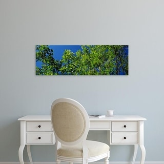 Easy Art Prints Panoramic Images's 'Low angle view of maple trees' Premium Canvas Art