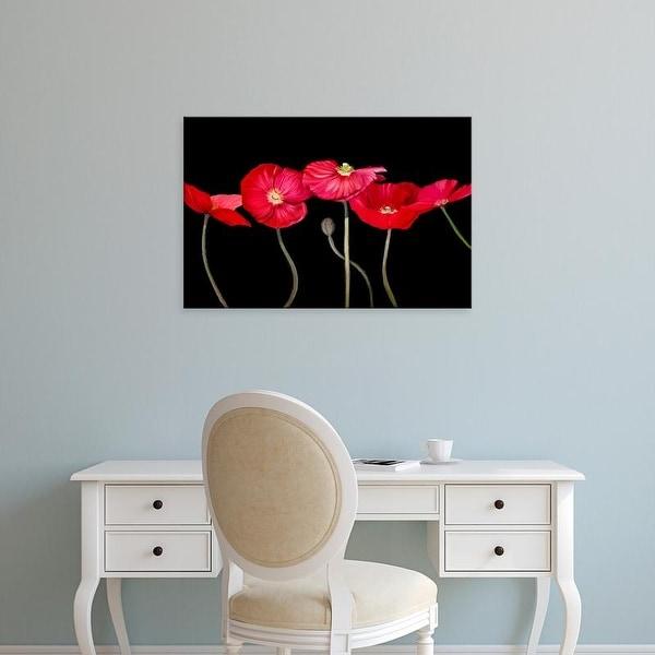 Easy Art Prints Sandra Iafrate's 'Dramatic Poppies' Premium Canvas Art