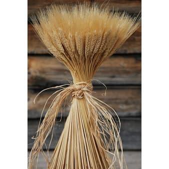 Decorative Large Dried Wheat Bunches 16 oz (1 LB) Wheat Bundle, 80-120 stems, Blond Wheat -- Short stem single bunch - Natural