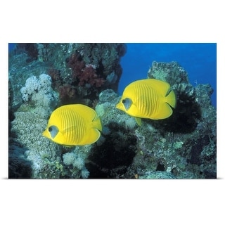 Poster Print entitled Butterfly Fish Red Sea