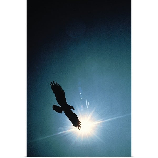 Shop Silhouette of bald eagle flying in sky - Multi-color