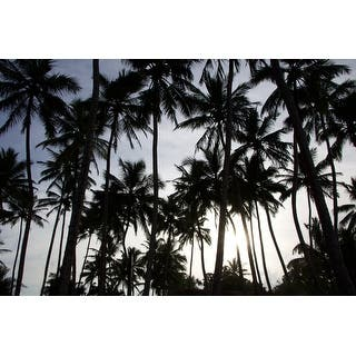 Palm Trees And Sunset Canvas Wall Art Photograph (Option: Outdoor Art) https://ak1.ostkcdn.com/images/products/is/images/direct/c8e94a9b4fecdfa2b469e5ec73b28c4f34d0871d/Palm-Trees-And-Sunset-Canvas-Wall-Art-Photograph.jpg?impolicy=medium