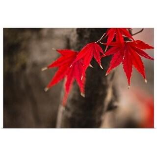 """Maple tree"" Poster Print"