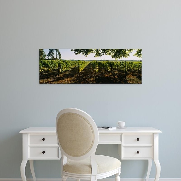Easy Art Prints Panoramic Images's 'Grape vines in a vineyard, Loire Valley, France' Premium Canvas Art