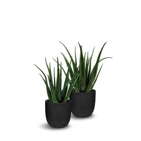 Artificial Aloe with Pot 2 Piece Set - 2 Piece Set