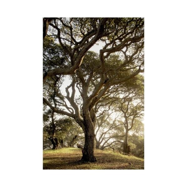 Easy Art Prints Alan Blaustein's 'Oak Tree #69' Premium Canvas Art