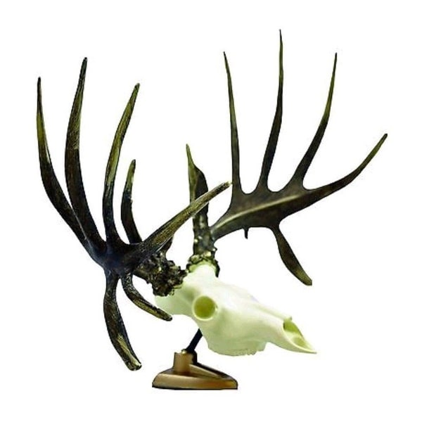 Shop Raxx Big Rack Whitetail Deer Skull Antlers Trophy