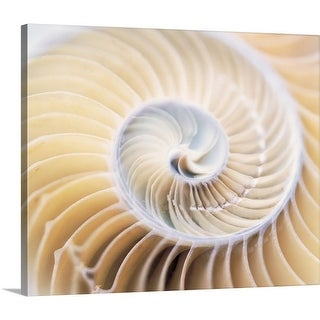 Premium Thick-Wrap Canvas entitled Close up of shell