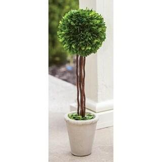 """Boxwood Topiary 20"""""""