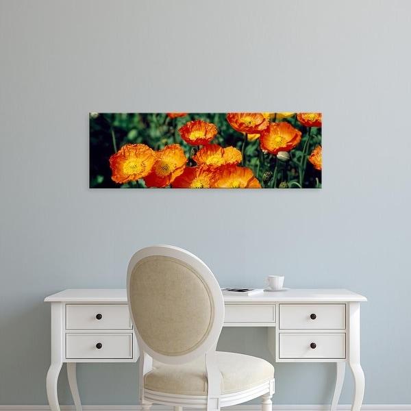 Easy Art Prints Panoramic Images's 'Poppies in bloom, Japan' Premium Canvas Art