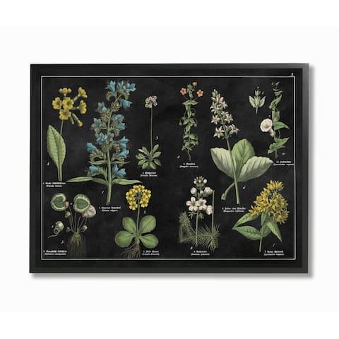 Stupell Industries Antique Wild Flower Chart Scientific Botanical Print Framed Wall Art